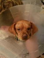 Cheri After Surgery